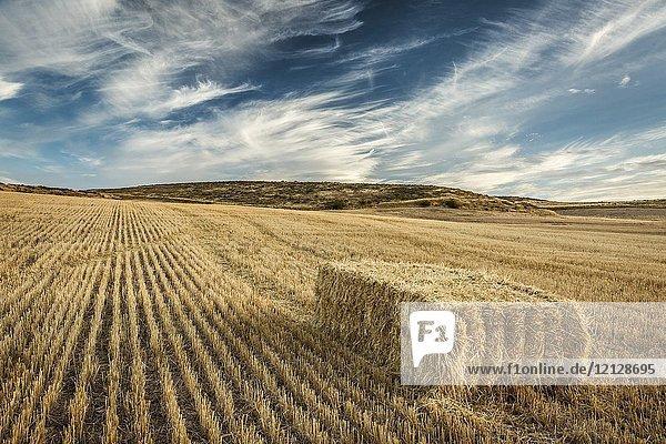 Cereal land. Tierra Estella county  Navarre  Spain  Europe.