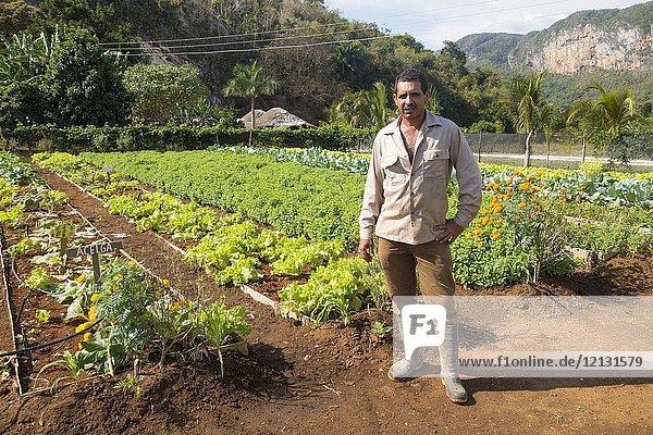 Organic farning  Viñales  Cuba.