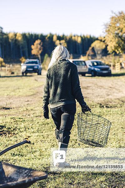 Durchgehende Rückansicht der reifen Frau mit leerem Korb auf dem Feld