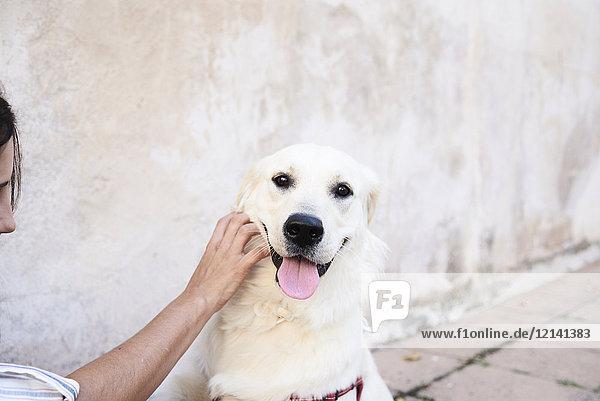 Portrait des vom Besitzer gestreichelten Hundes