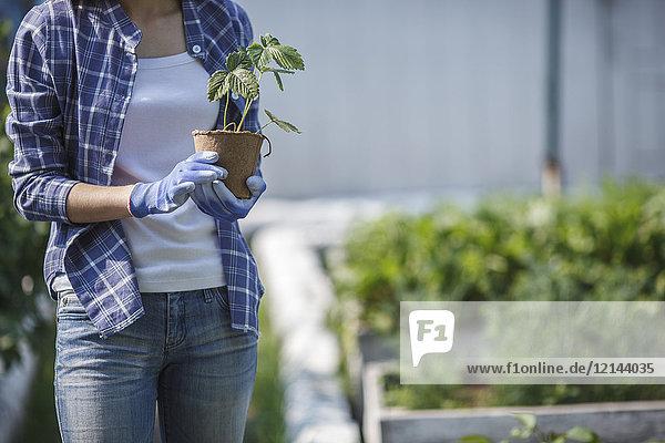Junge Frau pflanzt Erdbeerpflanze im Garten