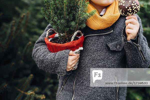 Fröhlicher Junge bereitet sich auf Weihnachten vor  hält Topfbaum  isst Schokolade getauchten Apfel
