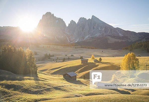 Alpe di Siusi  South Tyrol  Italy.