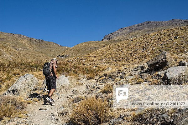 A man hikes on a trail in the mountains above Capileira  Alpujarras  Andalucia  Spain.