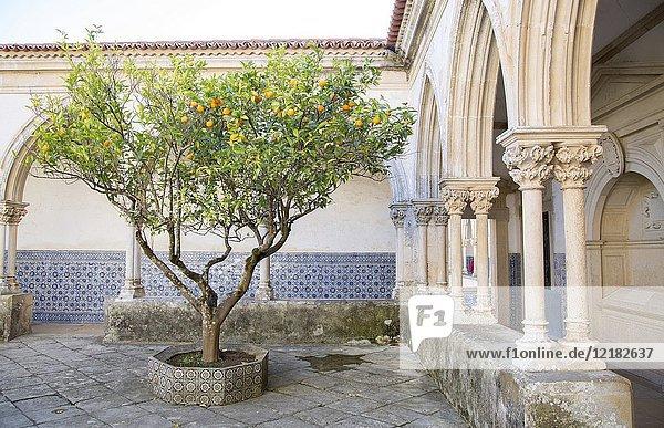 Orange Tree in Patio  Convento de Cristo  Tomar  Portugal.