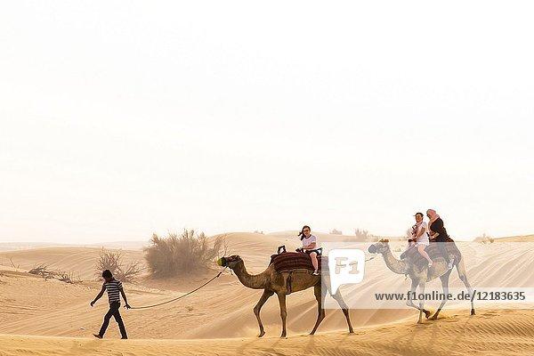 Camel Ride in the Red Dune Desert  Dubai  United Arab Emirates.