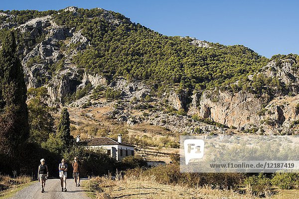 Hikers on a road below the village of Grazalema  Cadiz province  Andalucia  Spain.