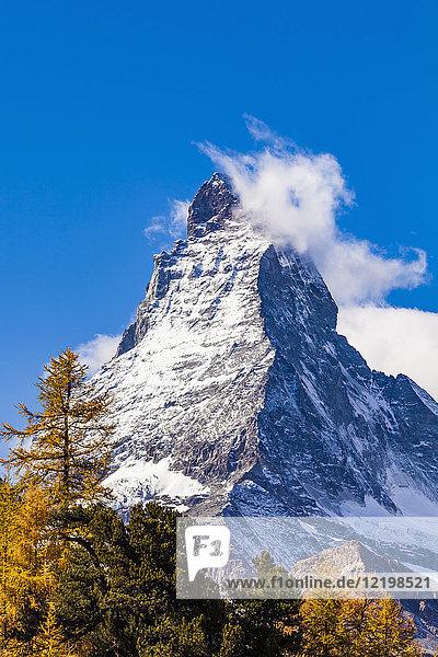 Schweiz  Wallis  Zermatt  Matterhorn  Bäume im Herbst