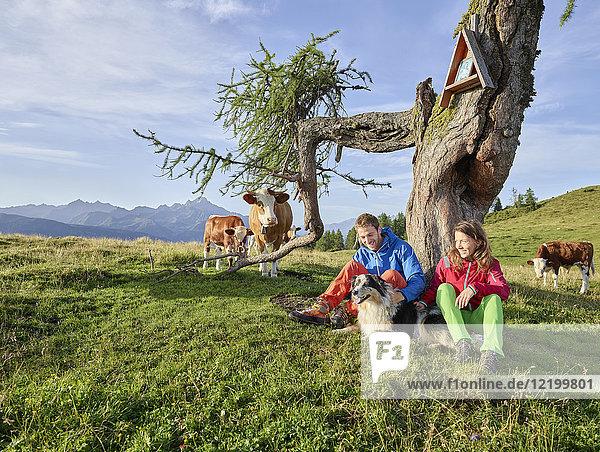 Österreich  Tirol  Mieming-Plateau  Wanderer mit Hund bei einer Rast auf der Alm mit Kühen