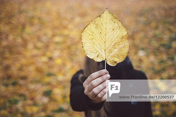 Frauenhand mit gelbem Herbstblatt  Nahaufnahme