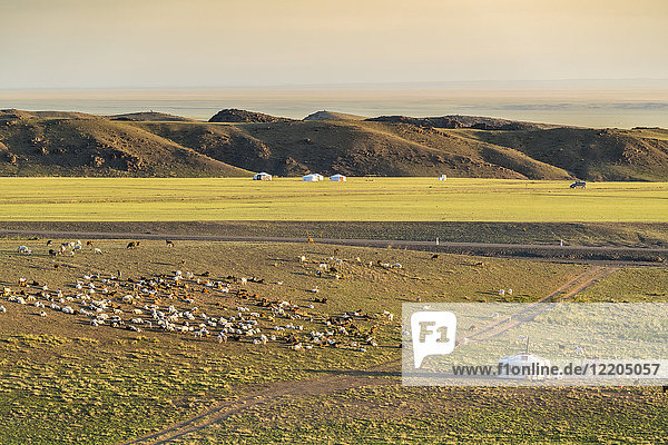 Nomadic camp and livestock  Bayandalai district  South Gobi province  Mongolia  Central Asia  Asia