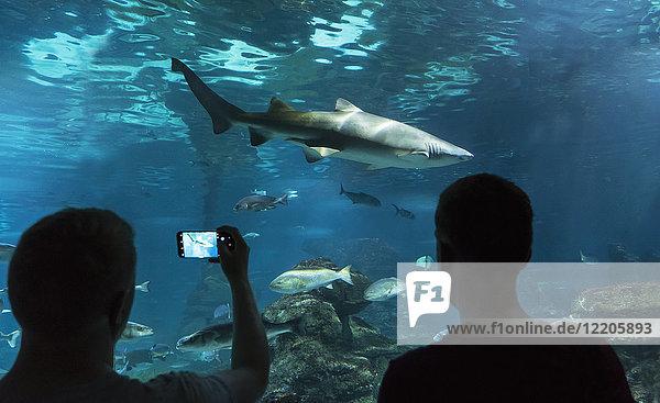 Aquarium  Barcelona  Catalonia  Spain  Europe