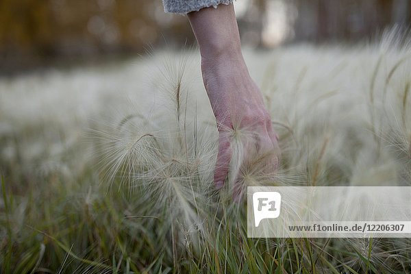 Hand of Caucasian woman picking hay seeds