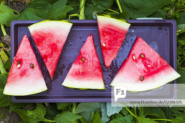 Watermelon slices on plastic tray
