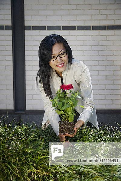Asian woman planting flower in garden