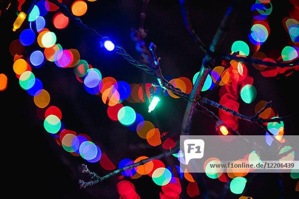 Defocused lights behind tree branch