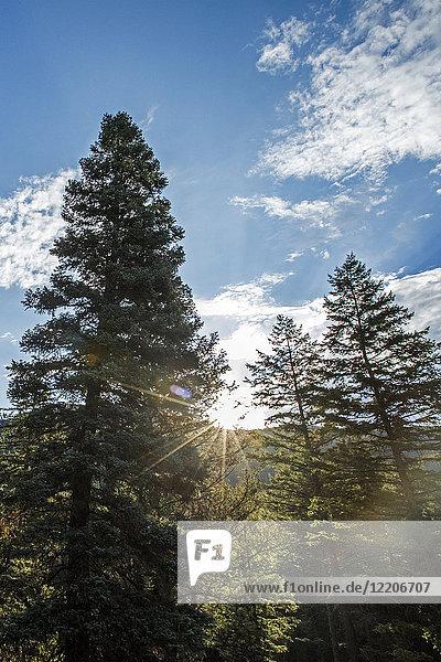 Sunbeams on trees