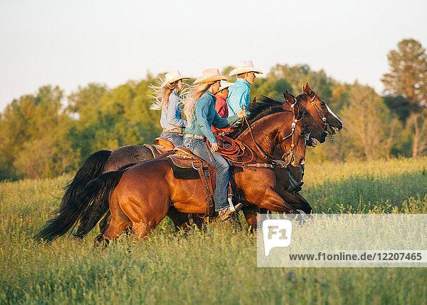 Gruppe von Personen  die Pferde im Feld reiten