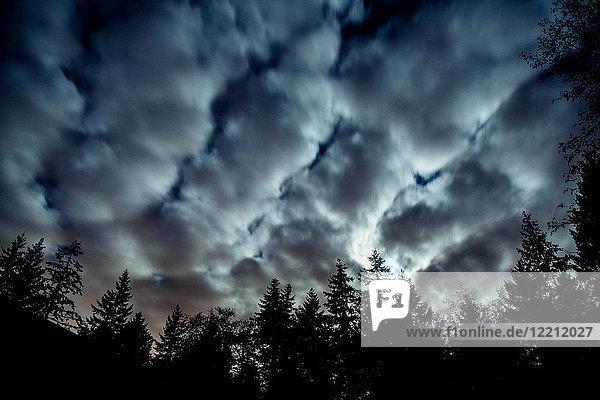 Dramatic clouds over trees  Bainbridge  Washington  USA