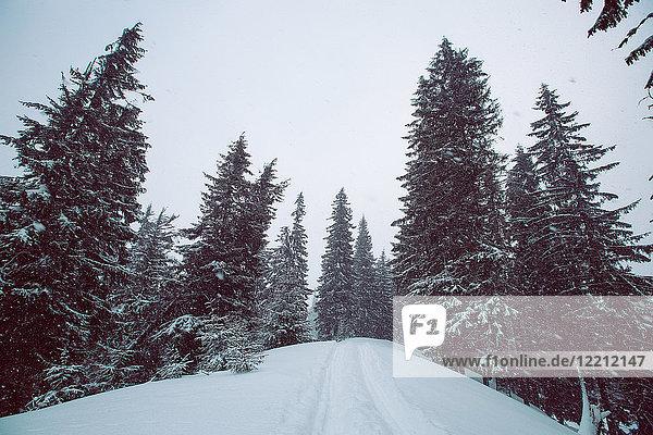 Wald im Winter  Gurne  Ukraine