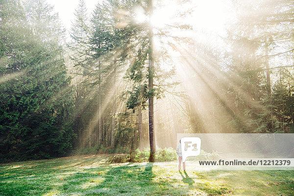 Man standing  looking at sunlight shining through trees  rear view  Bainbridge  Washington  USA