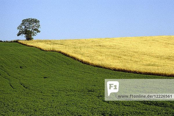 Sienese landscape  Tuscany  Italy