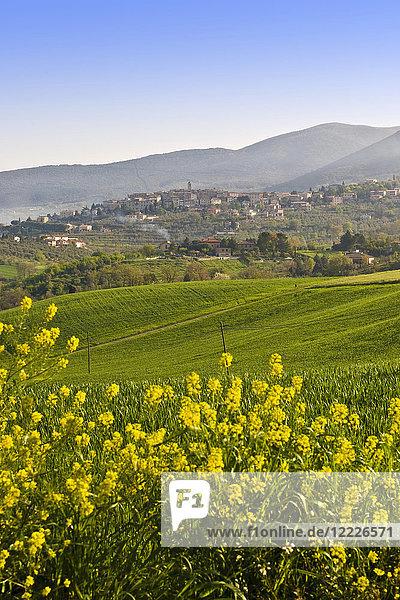 Landscape  surrounding of Montecchio  Umbria  Italy