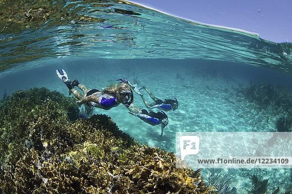 Über/Unterwasser von drei Schnorchlern unter Wasser an einem Riff in der Nähe von New Providence  Bahamas