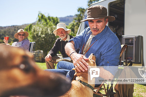 Aktiver Seniorenhund auf dem sonnigen Sommercampingplatz