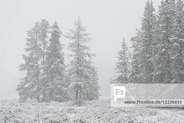USA  Wyoming  Snowy scenery with trees in Grand Teton National Park