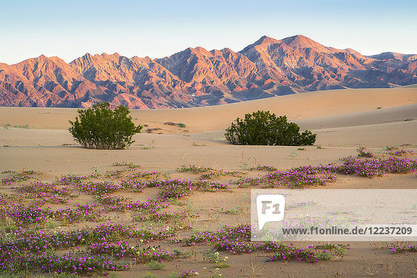 USA  California  Death Valley National Park  View of desert at sunrise