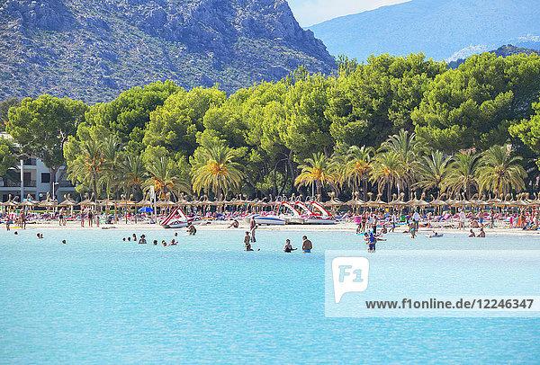 Beach of Port de Alcudia  Mallorca (Majorca)  Balearic Islands  Spain  Mediterranean  Europe