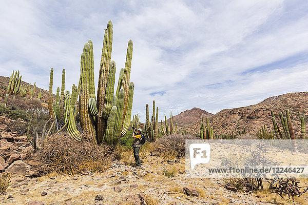 Photographer with Mexican giant cardon (Pachycereus pringlei)  Isla San Esteban  Baja California  Mexico  North America