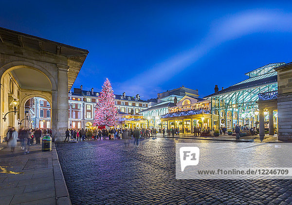 View of Christmas Tree and St. Paul's Church in Covent Garden at dusk  London  England  United Kingdom  Europe