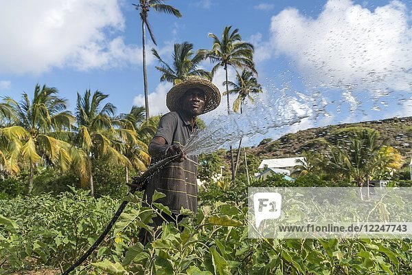 African farmer irrigaties field  Saint Francois  Rodrigues Island  Mauritius  Africa