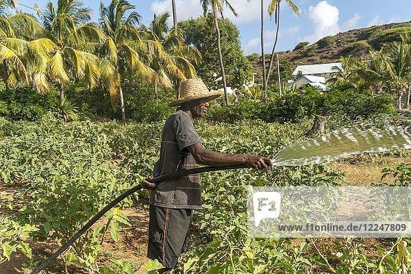 Afrikanischer Bauer bewässert Feld  Saint Francois  Insel Rodrigues  Mauritius  Afrika