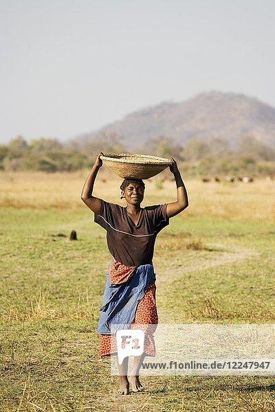 Die Tonga-Frau trägt einen Korb mit Hirse in ihr Dorf am Kariba-See  Sambia.