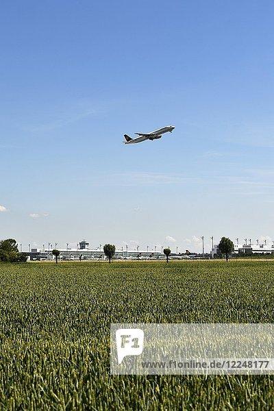Feld mit Flughafengelände im Hintergrund  Flugzeug beim Start  Lufthansa Airbus A321  Flughafen München  Deutschland  Europa