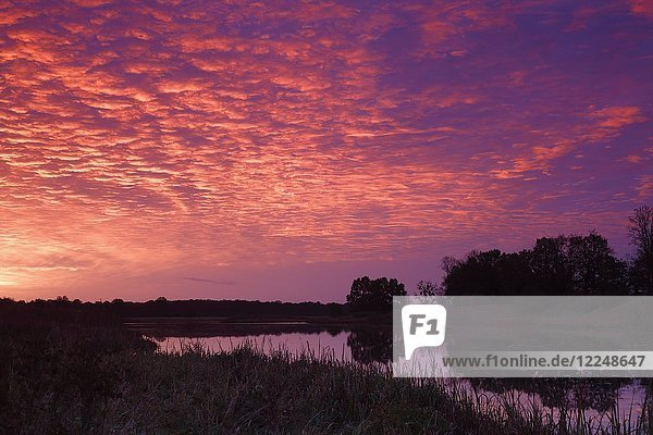 Sunrise with Altocumulus clouds over the Löbben Lake  Biosphere Reserve Middle Elbe  Saxony-Anhalt  Germany  Europe
