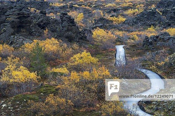 Herbstliche Vegetation mit Wanderweg  Dimmuborgir  Myvatn  Nordisland  Island  Europa