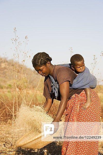 Tonga-Frau mit Kind auf dem Rücken  trennt Spreu vom Getreide  Lake Kariba  Sambia  Afrika