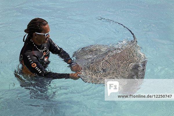 Polynesier  Taucher  spielt im Wasser mit Fantasea-Stechrochen (Himantura fai)  Moorea  Gesellschaftsinseln  Inseln unter dem Winde  Französisch-Polynesien  Ozeanien