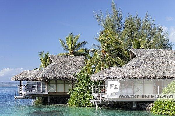 Bungalows am Meer mit Palmen  Luxushotel  Interconti Resort  Moorea  Gesellschaftsinseln  Inseln unter dem Winde  Pazifik  Französisch-Polynesien  Ozeanien
