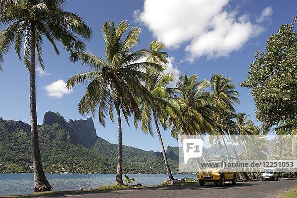 Verkehr  Straße mit Autos an der Opunohu Bay  Bucht mit Palmen am Meer  Pazifik  Moorea  Gesellschaftsinseln  Inseln unter dem Winde  Französisch-Polynesien  Ozeanien