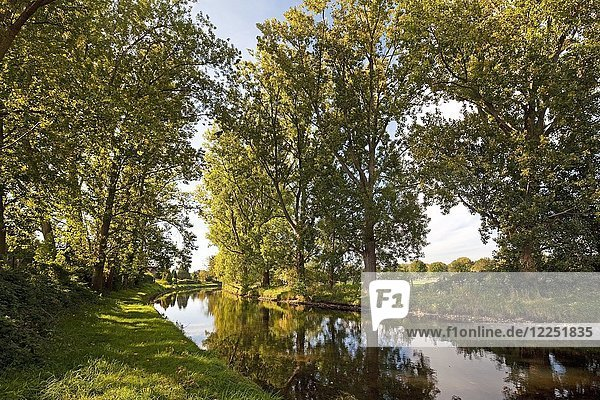 Trees at the Niers  near Weeze  Lower Rhine  North Rhine-Westphalia  Germany  Europe