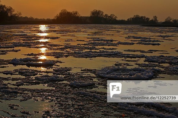 Ice run  small ice floes on the Elbe at sunset  Biosphere Reserve Middle Elbe  Dessau-Roßlau  Saxony-Anhalt  Germany  Europe