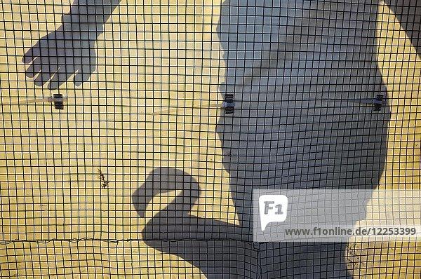 Rosaflamingo (Phoenicopterus roseus)  Silhouette eines Freiwilligen und eines Vogels in einem Gehege zur Beringung und medizinischen Untersuchung  Laguna de Fuente de Piedra  Provinz Malaga  Andalusien  Spanien  Europa