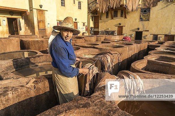 Ledergerber an Becken mit Farbe zum Färben von Leder  Färberei  Gerberei Tannerie Chouara  Gerber- und Färberviertel Fes el Bali  Fes  Marokko  Afrika