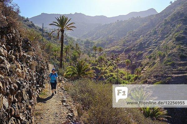 Frau wandert auf Wanderweg im Barranco de Simancas  bei Vallehermoso  La Gomera  Kanarische Inseln  Spanien  Europa