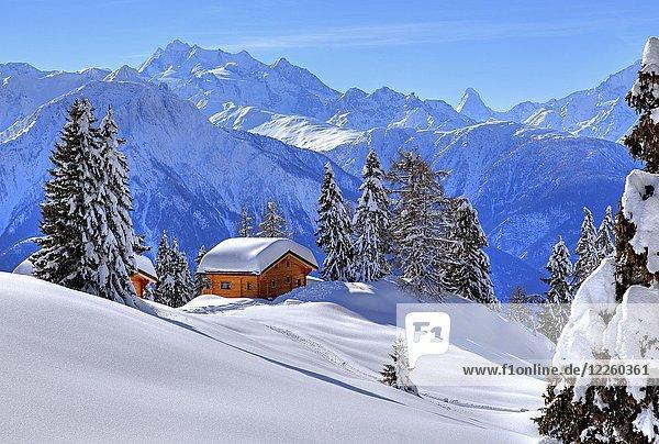 Winterlandschaft mit tief verschneiten Chalets  hinten Gipfel von Dom  4545m  und Matterhorn  4478m  Riederalp  Aletschgebiet  Oberwallis  Wallis  Schweiz  Europa